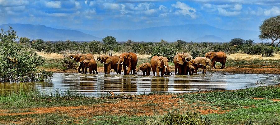 Afrika erleben mit Augustine Tours – Die Spezialisten für Afrikareisen